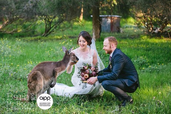 Woodstock Coterie: Weddings at WOODSTOCK - have photos with our furry friends