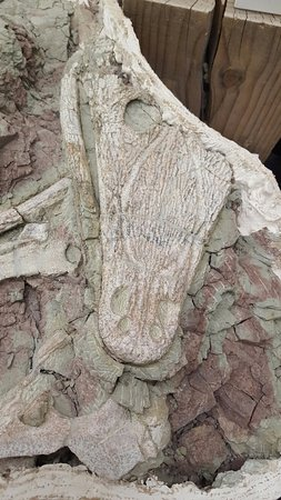New Mexico Museum of Natural History and Science: Fossilized Ancient Crocodile