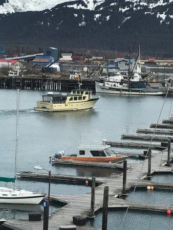Seward Boat Tours Reviews