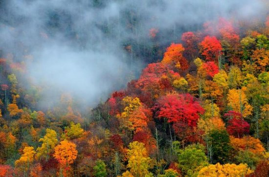 Smoky Mountain Trees of Many Colors