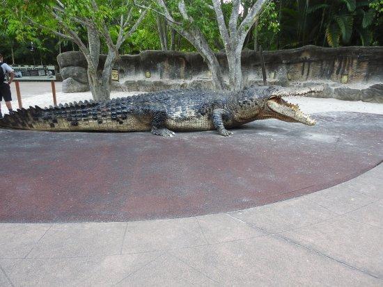 Australia Zoo: The big croc