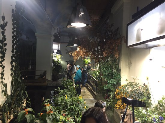 Nola Picture Of Audubon Butterfly Garden And Insectarium