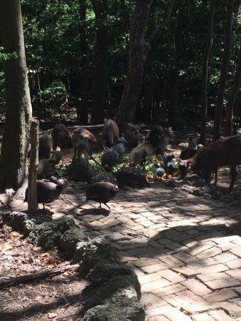 Barbados Wildlife Reserve صورة