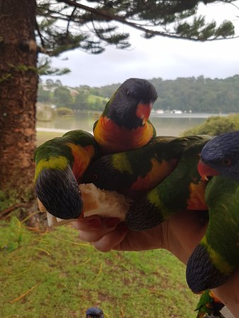 Narooma, Australia: Hand feeding the lorikeets - priceless!