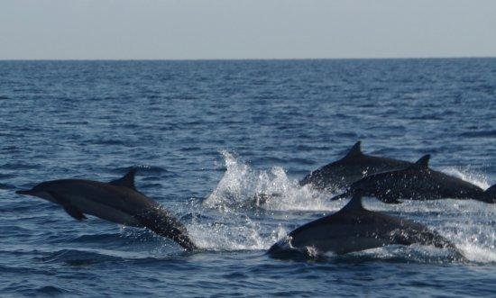 Lovina Beach, Indonesia: Swimming dolphins