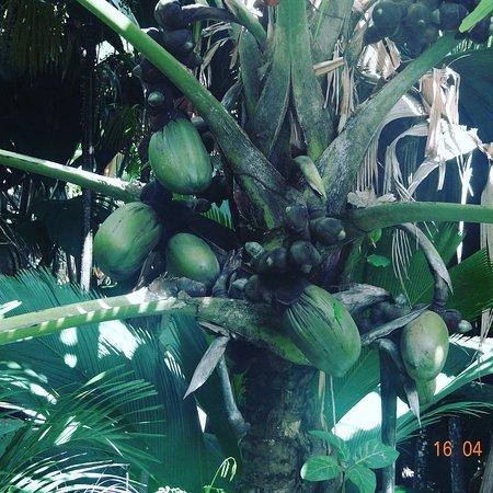 Praslin Island, Seychelles: IMG_20170420_161137_445_large.jpg