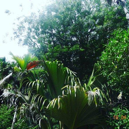 Praslin Island, Seychelles: IMG_20170420_161137_434_large.jpg
