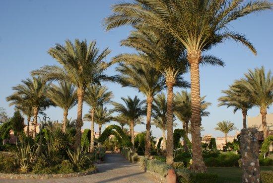 Planten En Bomen : Mooie tuin diversen planten bomen . foto van lti akassia beach