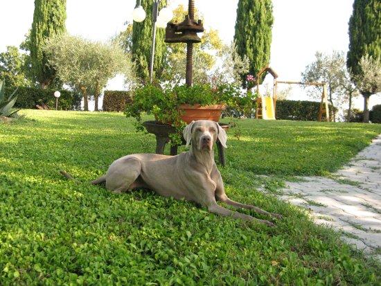 Acquaviva di Montepulciano, Italien: Cani benvenuti! Dogs are welcome!