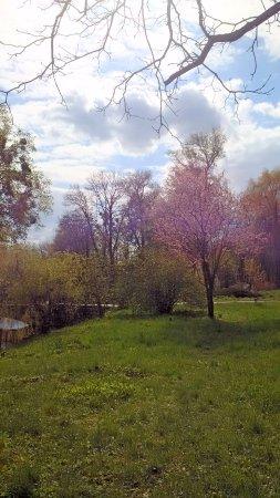 Bila Tserkva, Oekraïne: Цвет