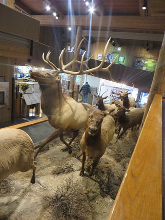 Jackson Hole, WY: Elk Display