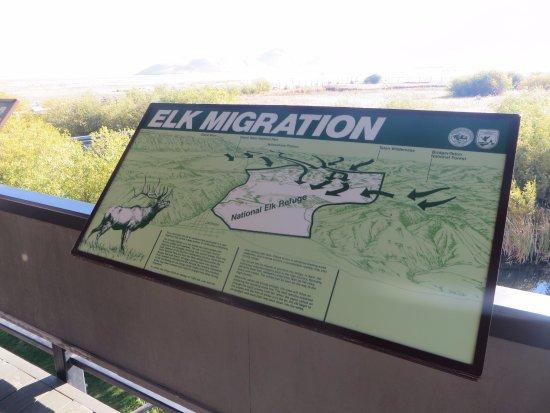 Jackson Hole, WY: Elk Refuge