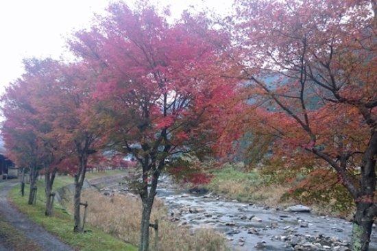 Shiso, Japón: 紅葉2016年11月