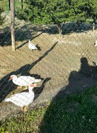 Agriturismo Cascina Tollu: The ducks and chickens my kids fell in love with