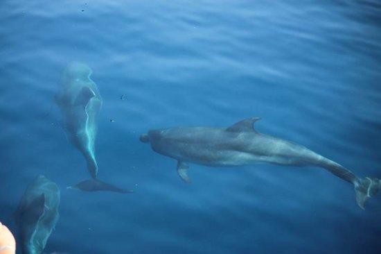 Saint-Cyprien, France: Grand dauphin blanc