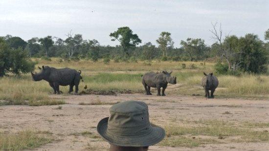 Manyeleti Game Reserve, Sudáfrica: Rhino for breakfast