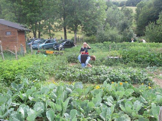 Sant'Anna Pelago, Italy: il nostro orto
