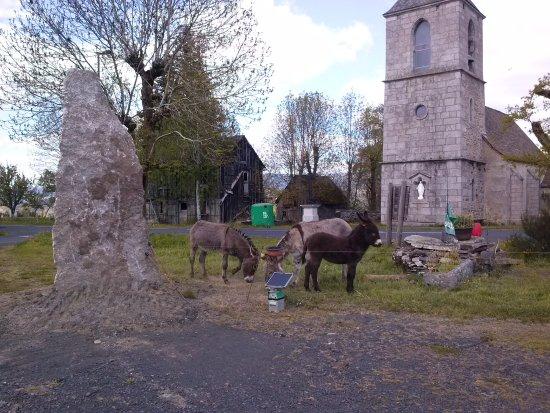 Loubaresse, Francia: les ânes