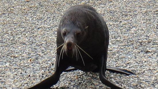 Con Wildsouth Discovery, pude ver animales que nunca pensé ver a esa distancia