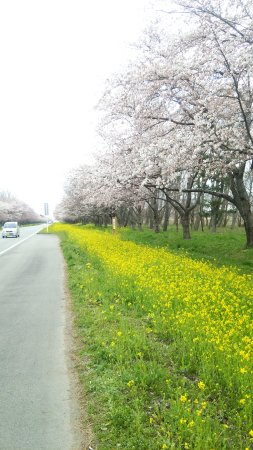 Ogata-mura, Japón: DSC_2918_large.jpg
