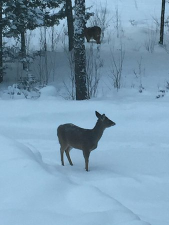 Ely, MN: An early morning visitor