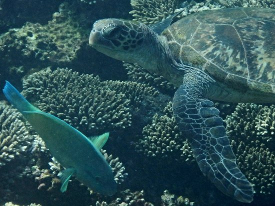 珊瑚灣照片