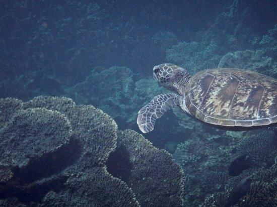 Coral Bay, Avustralya: photo2.jpg