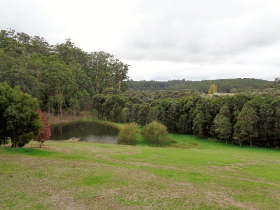 Pemberton, Australia: View from the porch