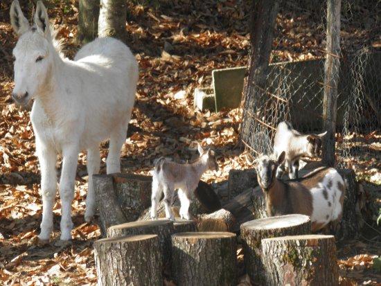 Sorbo San Basile, Italia: Tutti gli animali della fattoria hanno un nome con cui i bambini possono chiamarli