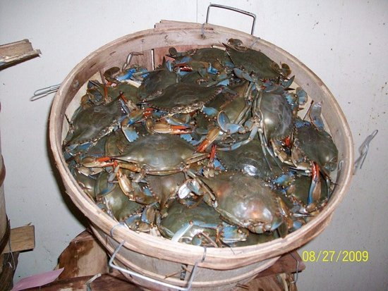 Trenton, NJ: Live Crabs at The Crab Shack