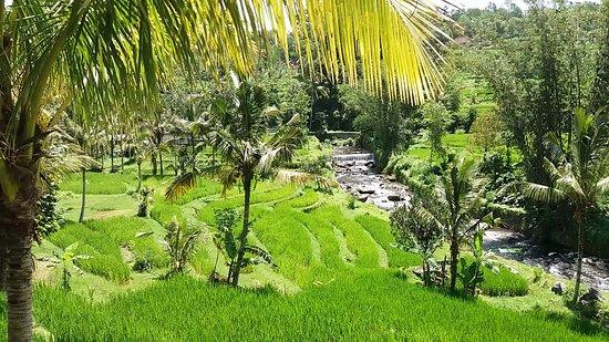Jatiluwih Green Land: Breathtaking view