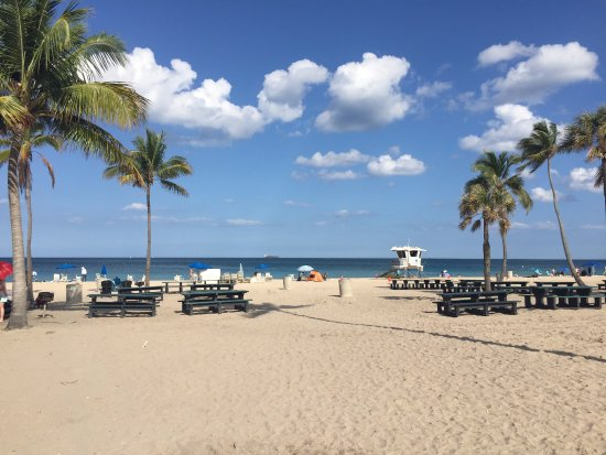 Fort Lauderdale Beach Park View Of Picnic Area