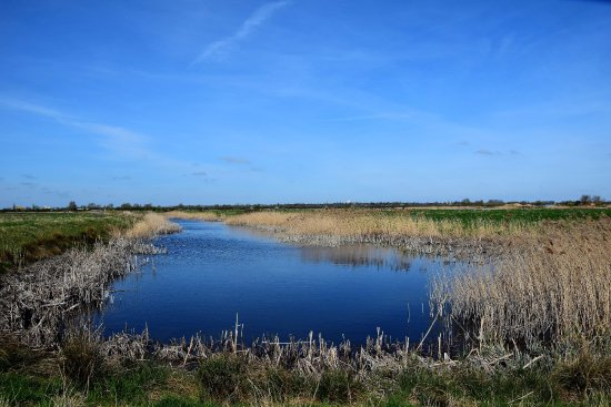 The Hanson-RSPB Wetland Project Ouse Fen Nature Reserve