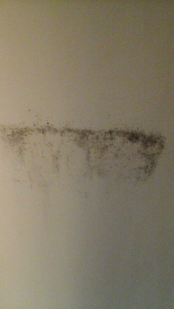 Inn of King of Prussia: Black mold on curtain by window and ac