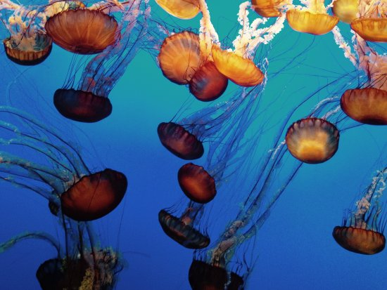 Monterey Bay Aquarium: photo0.jpg