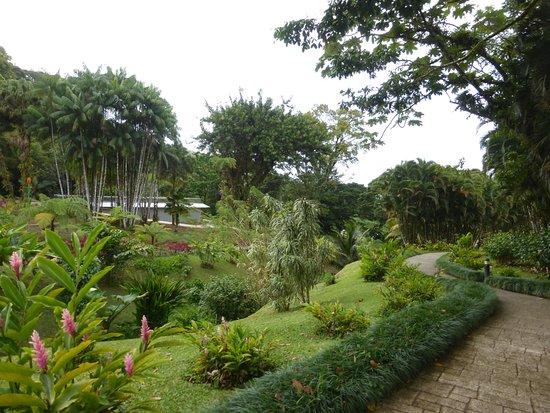 Le Morne-Rouge, Martinik: Balade dans les superbes jardins