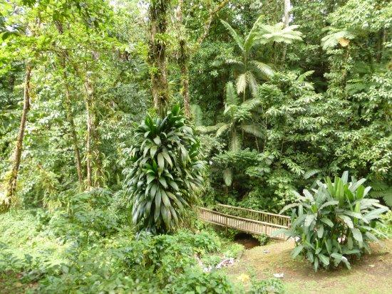 Le Morne-Rouge, Martinik: balade en forêt