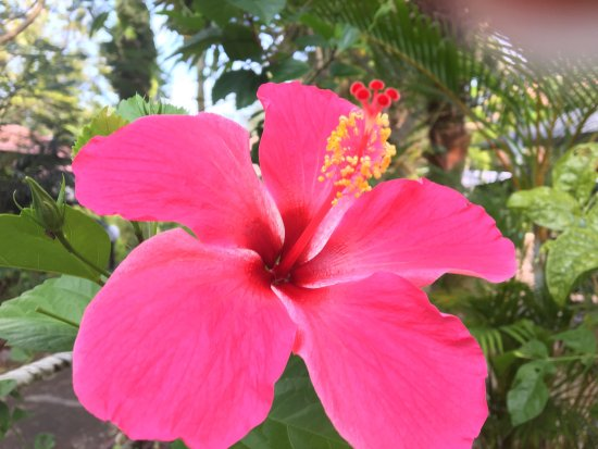 Pangkor Sandy Beach Resort: photo3.jpg