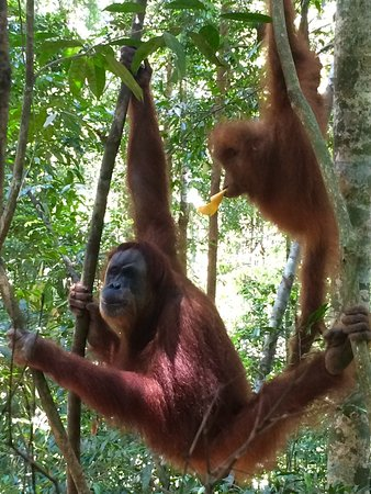Bukit Lawang Jungle Tour