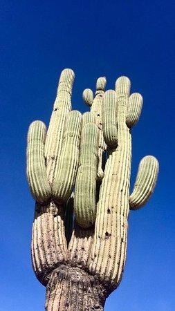 Apache Junction, AZ: photo4.jpg