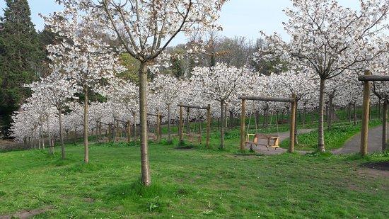 The Alnwick Garden