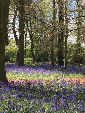 Henley-on-Thames, UK: A spring visit to Lord Nuffield's home