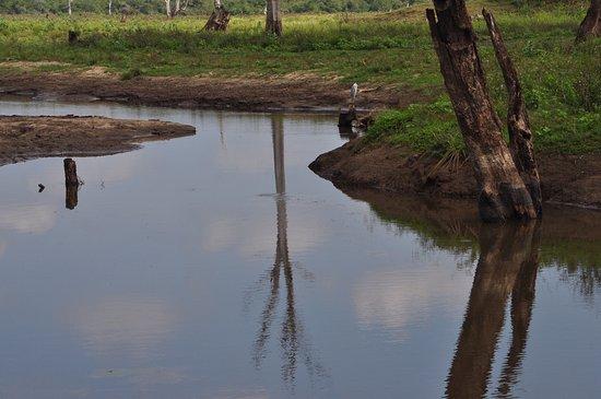 Uda Walawe National Park, Sri Lanka: Udawalawe National Park
