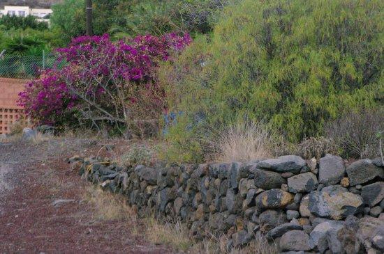 Guimar, Spain: Сад