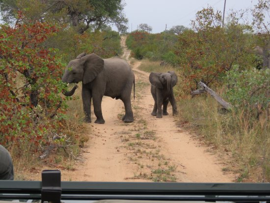 Timbavati Private Nature Reserve, South Africa: 20170423162513_large.jpg