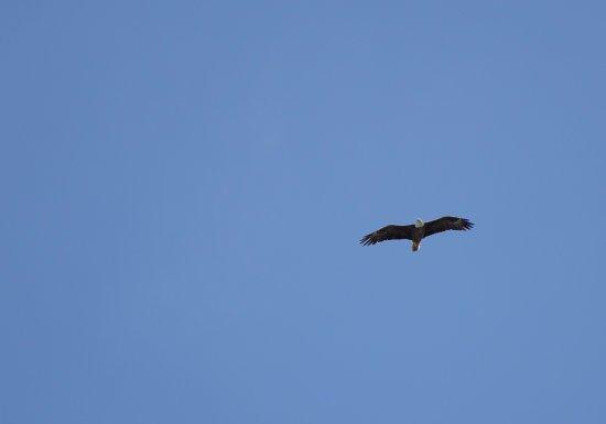 Vanderbilt Beach, FL: An eagle overhead