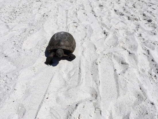 Vanderbilt Beach, FL: Our unexpected visitor