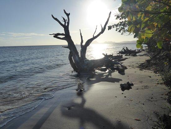 Le Marin, Martynika: La plage