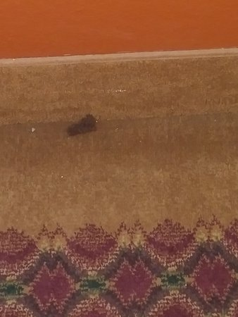Sulphur, Luizjana: Hairball ? Turd on the carpet in the Hall from check-in to check-out three days later