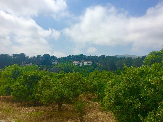 Palma de Gandia Photo